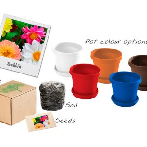 bedfordview-DAHLIA FLOWERS IN A BOX