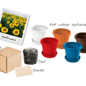 bedfordview-SUNFLOWERS IN A BOX