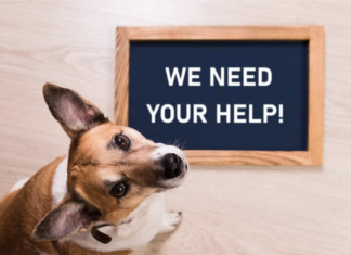 Germiston Bedfordview SPCA Requests Community Support
